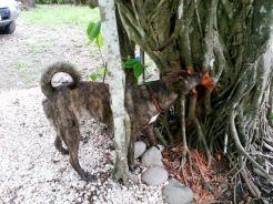 Reina eating tree