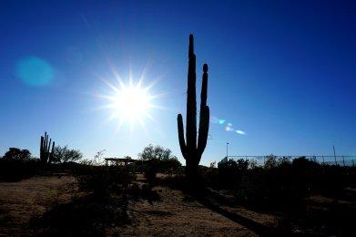 Grande Cactus